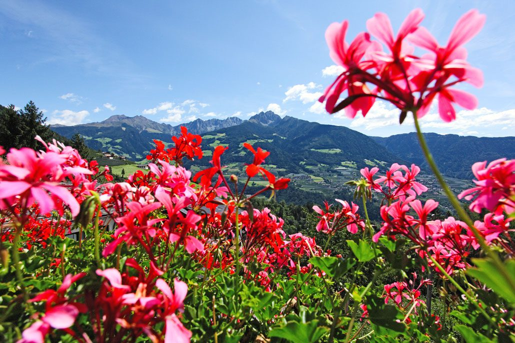 Neue Homepage Hotel Restaurant Tiroler Kreuz Dorf Tirol